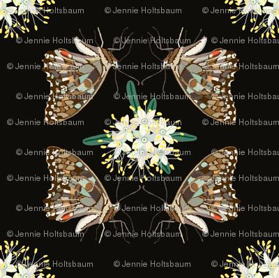 2941 Butterflies -Phebalium-Brown-_1