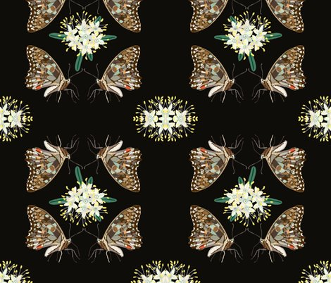 Rbutterflies-phebalium-brown-1_shop_preview