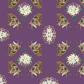 2941 Butterflies - Phebalium-Purple-_1