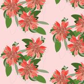 2941 Diploena-Pink-Pale