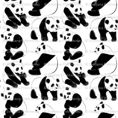Panda bears (small scale)