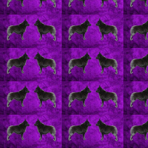Purple  Pair Schipperke