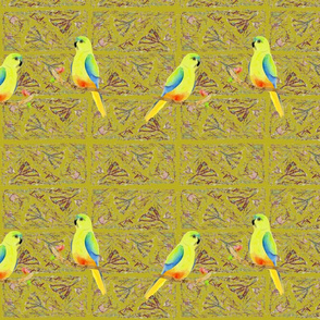 Orange -bellied parrot, Pale Olive, stripe