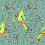 Rrorange_bellied_parrot_eucalypt_shop_thumb