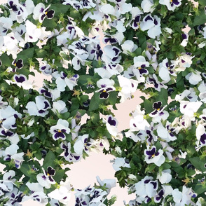 White flowers on skintones color background