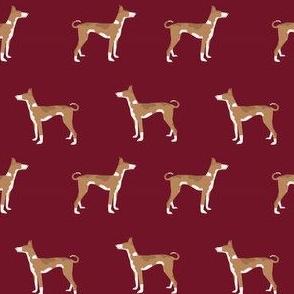 ibizan hound standing pure breed dog fabric ruby