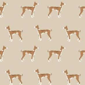 ibizan hound standing pure breed dog fabric tan