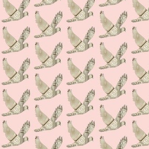 Parisian Dove French country on blush background