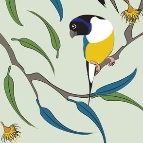 Australian Gouldian (Rainbow) Finches