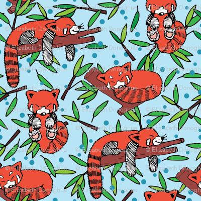sleeping red pandas