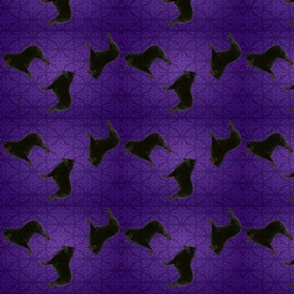 Pattern Purple Schipperke