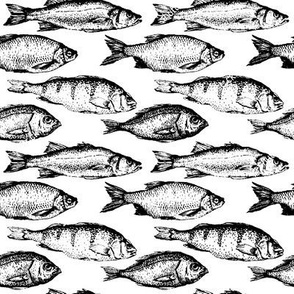 Fish Sketches // Large