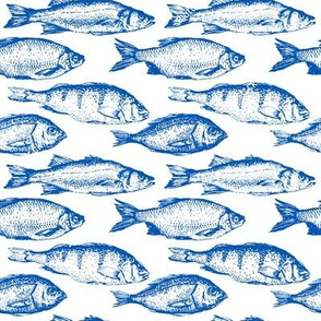 Fish Sketches in Blue // Large