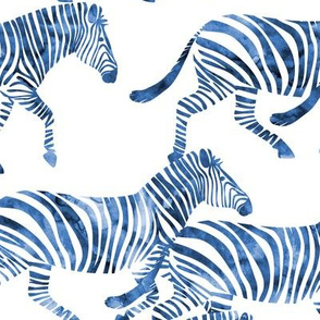 zebras in blue