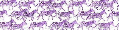 zebras in purple