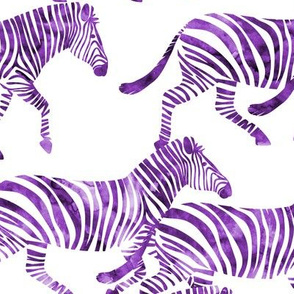 zebras in purple