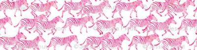 zebras in pink