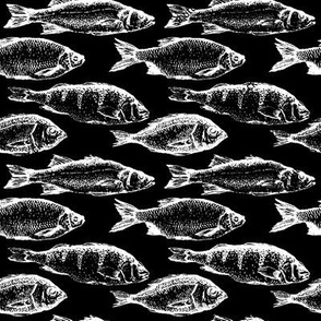 Fish Sketches on Black // Large