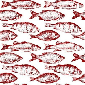 Fish Sketches in Red // Large