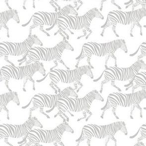 (small scale) zebras in grey