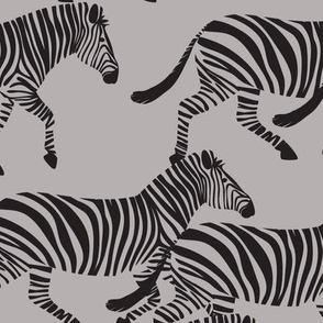 zebras on grey