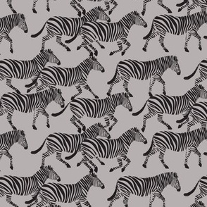 (small scale) zebras on grey