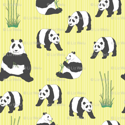 Panda Bears Munching on Bamboo