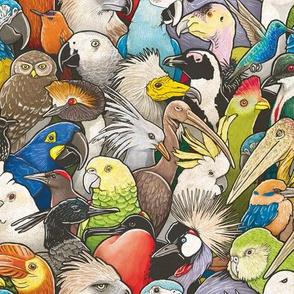 Endangered Birds