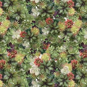 realistic succulents