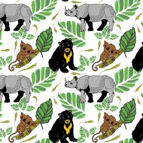 Borneo's loveable sunbear, rhino and tarsier