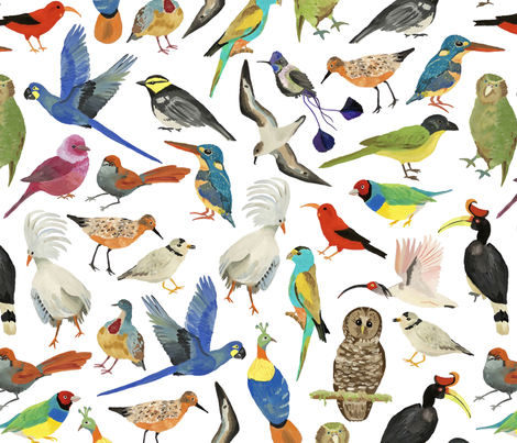 Endangered Birds Around the World fabric by dasbrooklyn on Spoonflower - custom fabric