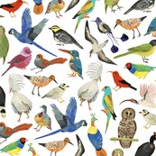 Rendangered-birds-around-the-world_shop_thumb