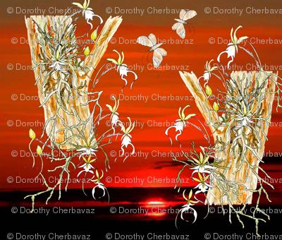 endangered ghost orchid in endangered Everglades final 042418