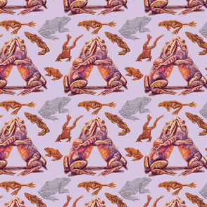 Frogs in lavender