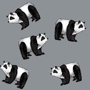 Pandas Everywhere on Grey