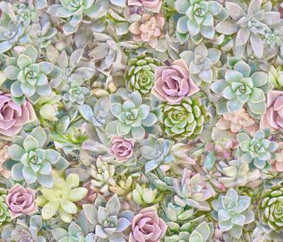Pastel Succulents