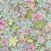Succulent_dry_brush_dark_taken_out_shop_thumb