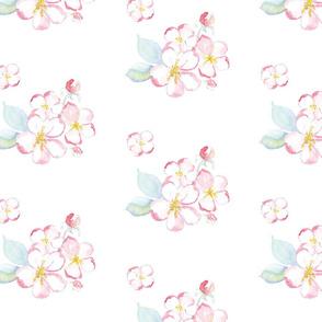 appleblossom white