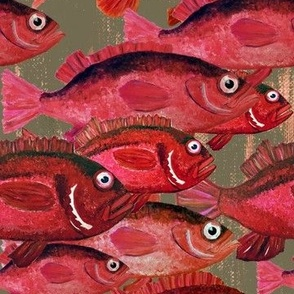 school of red snapper fish