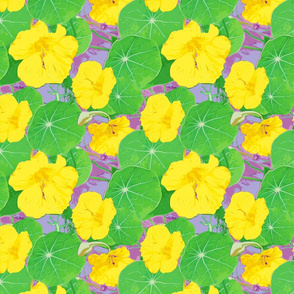Yellow Nastursiums-ed