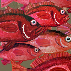 Red Snapper  - Large Scale