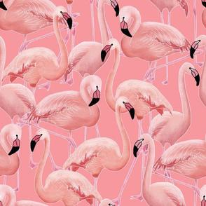 Flamingo (pink)