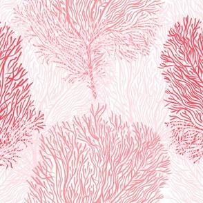 """Fan Corals Ombré (white) 14"""""""