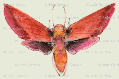 Painted Moth 1