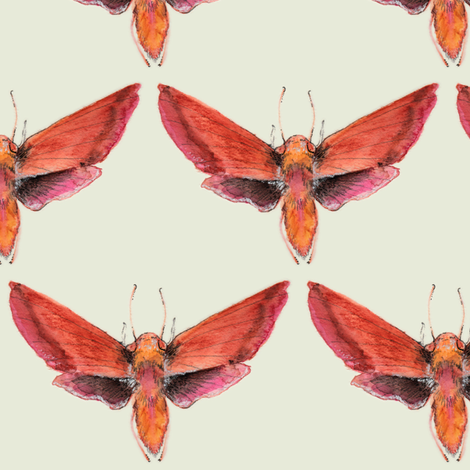 Painted Moth 1  fabric by jadegordon on Spoonflower - custom fabric
