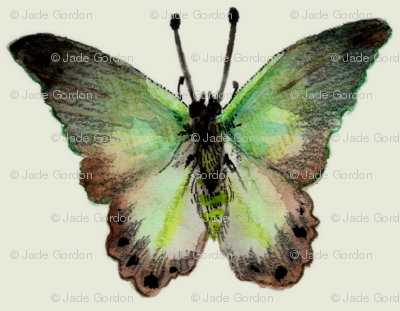 Painted Moth 2