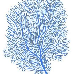 Azure Fan Corals (white)
