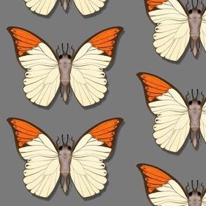 Moth 10