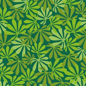 Manioc leaves dark