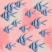 Banggai Cardinalfish Galore (coral)